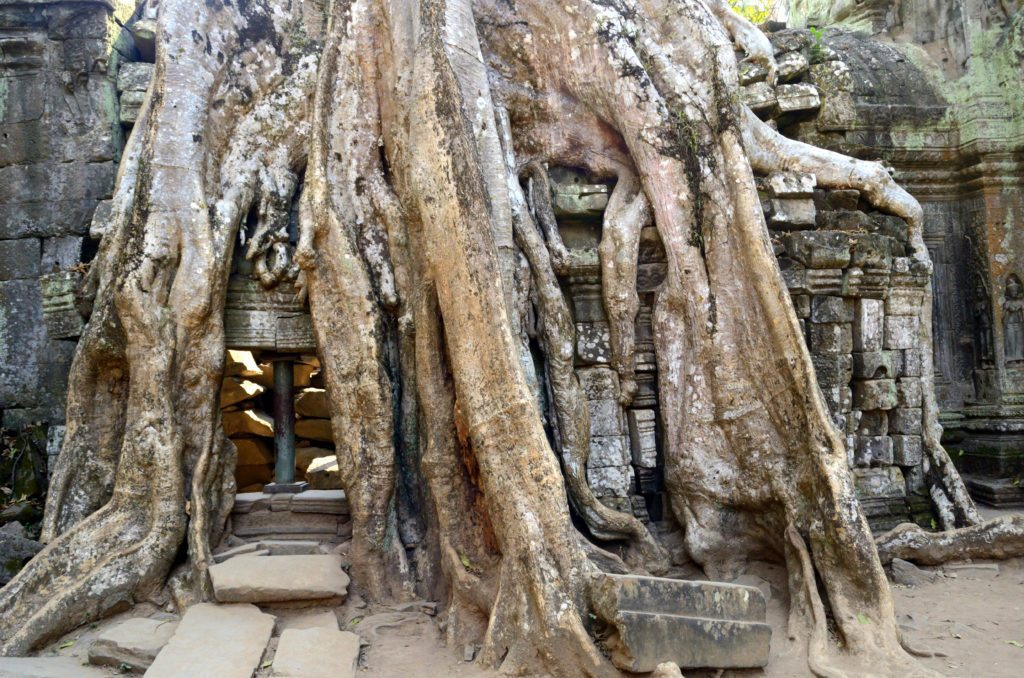 taprohm-nature-wild1