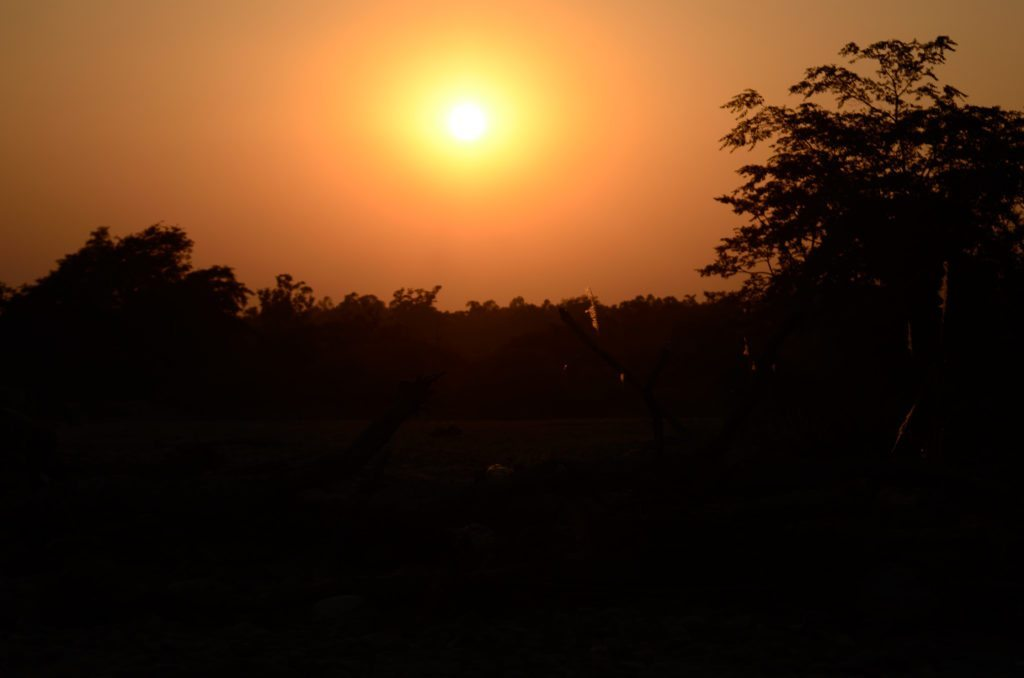 Sunrise Corbett wildlife