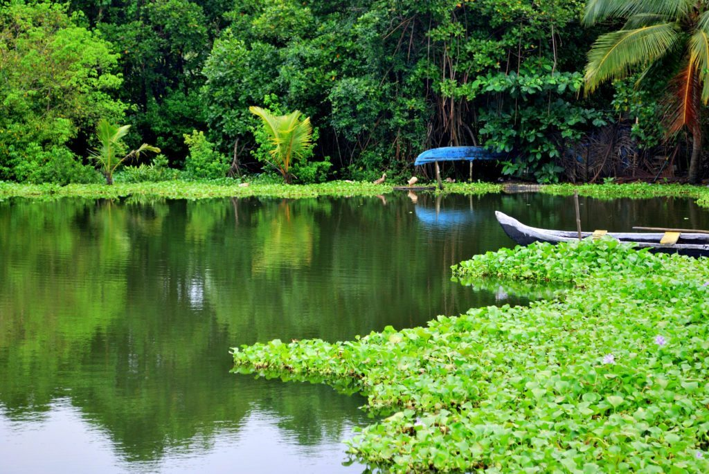 Backwaters Kerala monsoon, cities to visit in india, top cities to visit in india