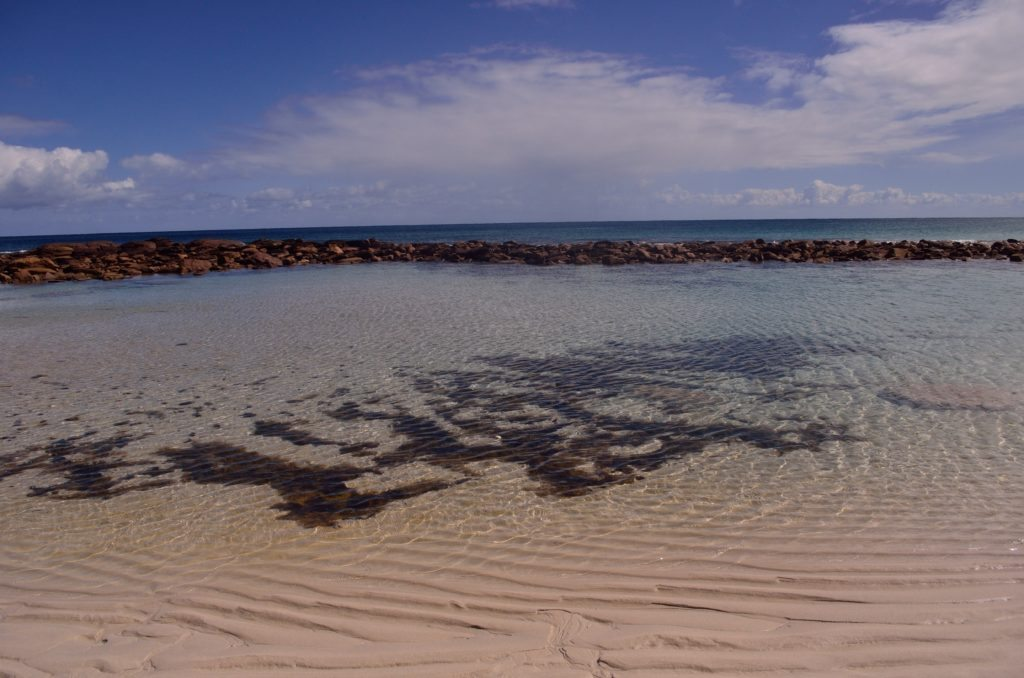 Pristine Beach at Kangaroo island