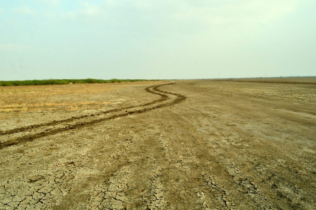 LRK , Rann, Gujarat, Little Rann of Kutch