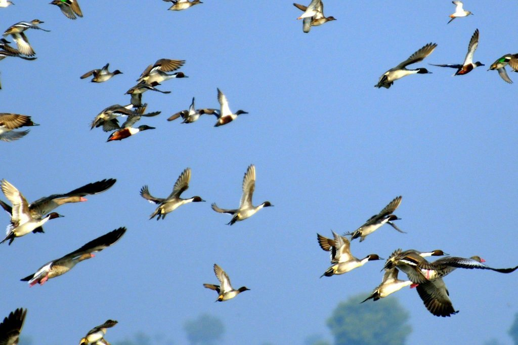 LRK, birds, Gujarat