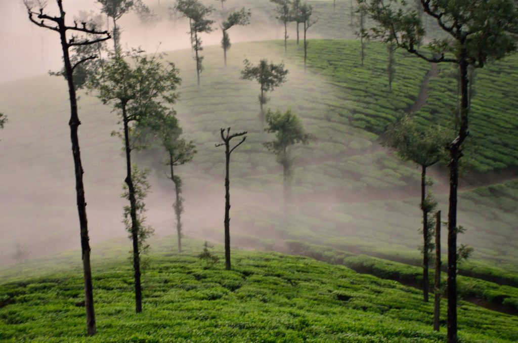 Image result for valparai
