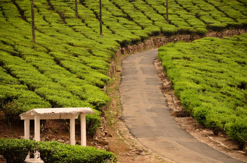 Valparai, tea plantations, BR Hills, best road trips in South India, best road trip from Bangalore