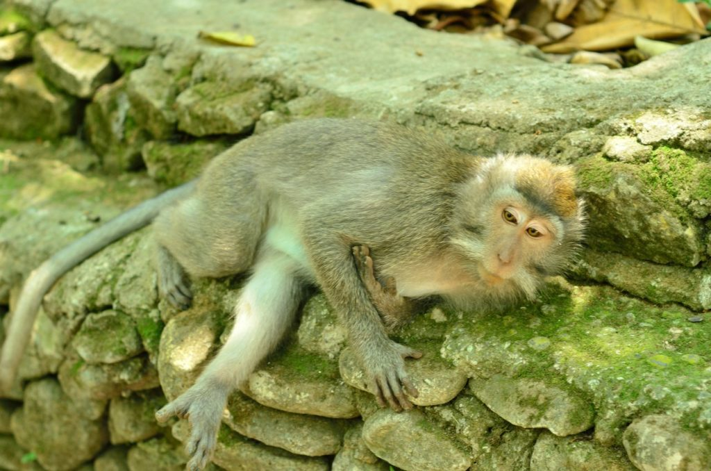 Monkey cemeteries in the Ubud Monkey Forest, bali