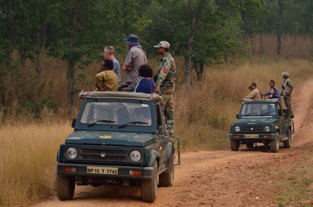 Madhya Pradesh, Tiger, wildlife, tiger reserves in Madhya Pradesh
