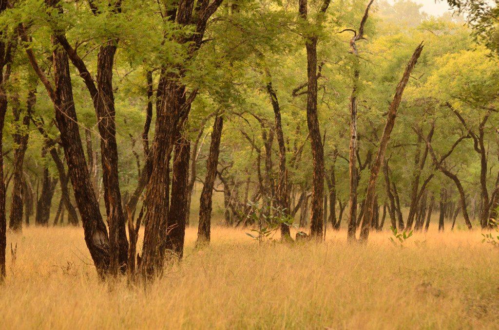 Madhya pradesh wildlife, tiger reserves in Madhya Pradesh