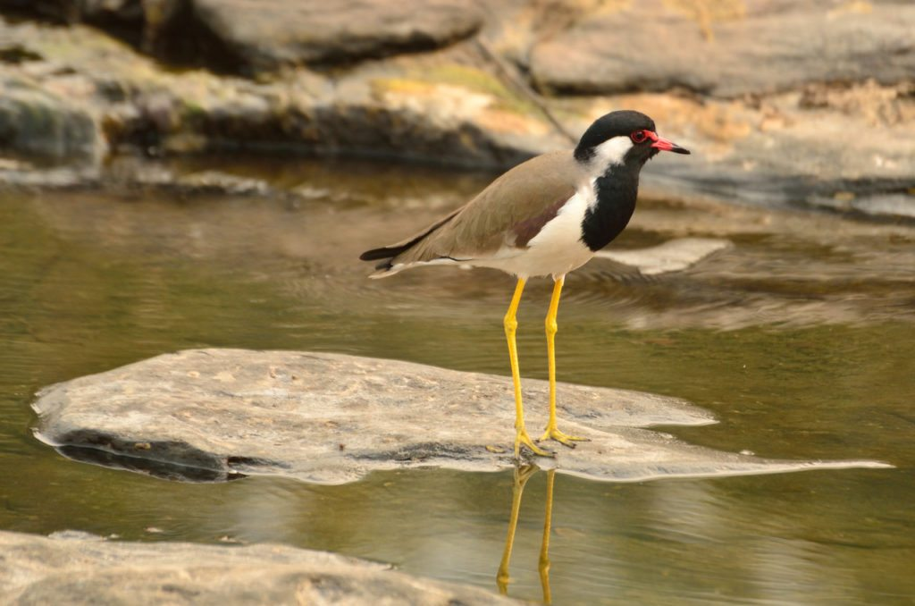 Madhya Pradesh wildlife, birds, tiger reserves in Madhya Pradesh