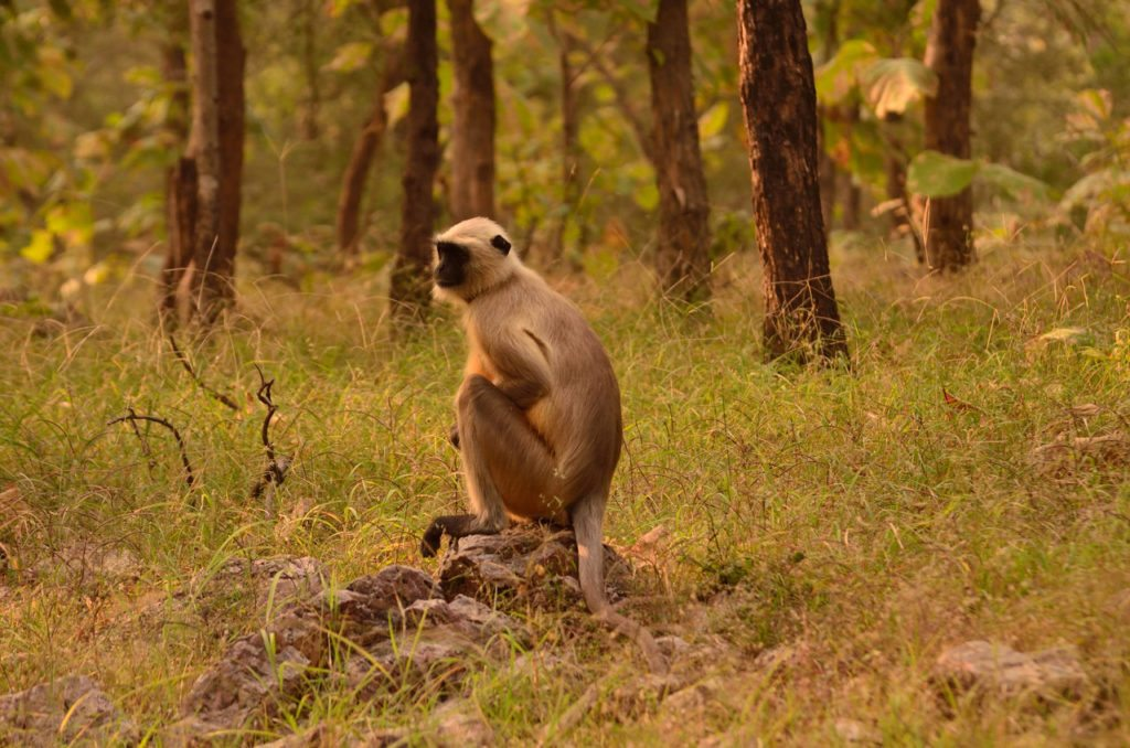 Madhya Pradesh wildlife, forests, tiger reserves in Madhya Pradesh, Panna National Park