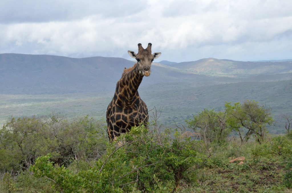 hluhluwe umfolozi game reserve, hluhluwe imfolozi Park, big five in South Africa, wildlife safari in South Africa